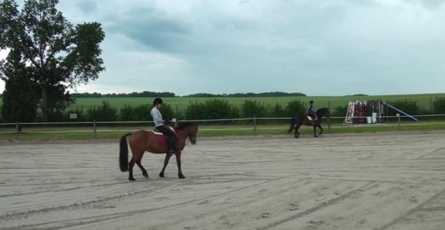 2ème Festival d'Arts Equestres de Sourdun